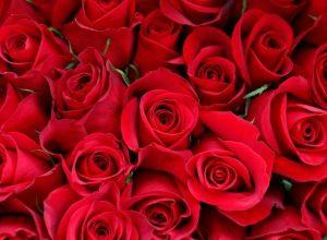 Noticias Gourmet San Valentín