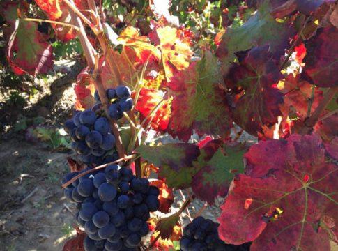 Comprar-vino-Luberri-noticias_gourmet
